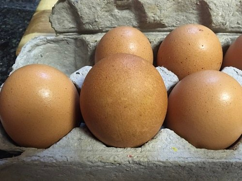 egg.jpg.afd2cc74c0c49225465e89e38dbab9c7.jpg